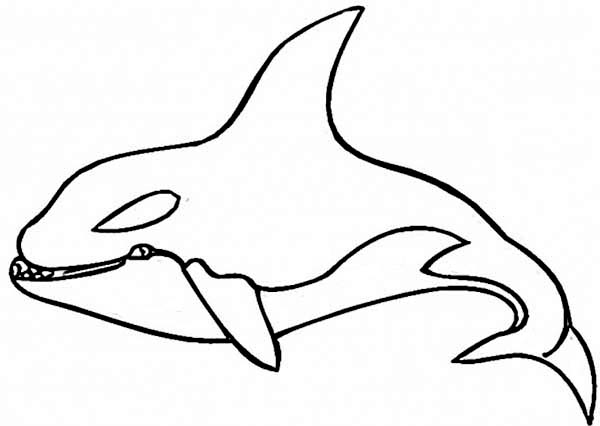 Hideous Killer Whale Coloring Page Kids Play Color