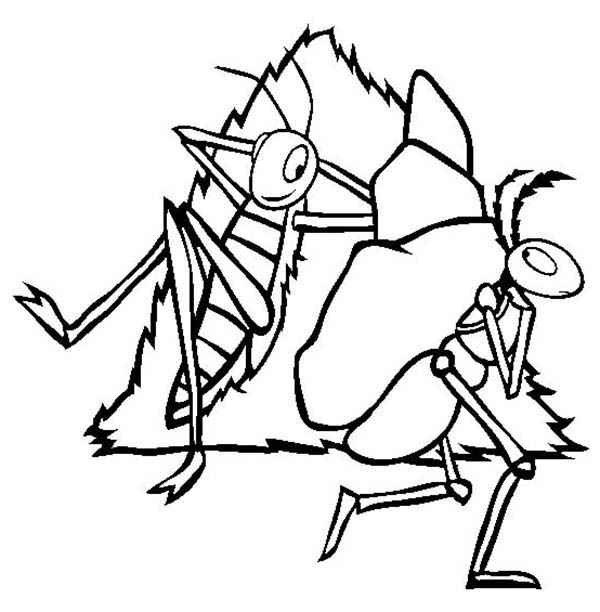 Grasshopper, : Lazy Grasshopper See Working Ant Coloring Page