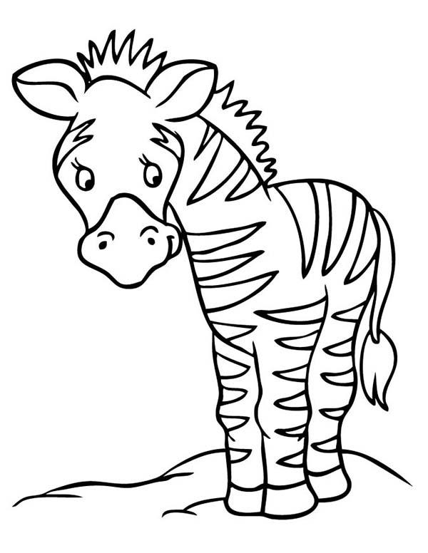 Zebra, : Little Sad Zebra Coloring Page