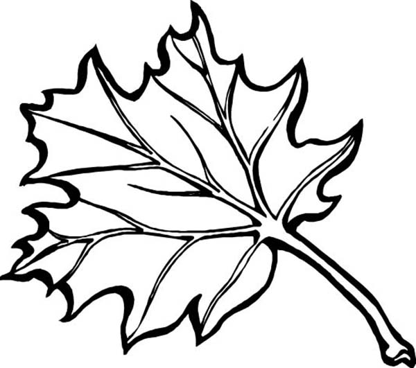 Fall Leaf, : Maple Fall Leaf Coloring Page