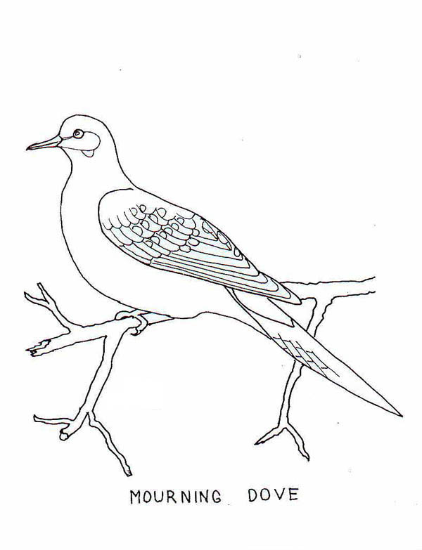 Robin, : Mourning Dove Coloring Page