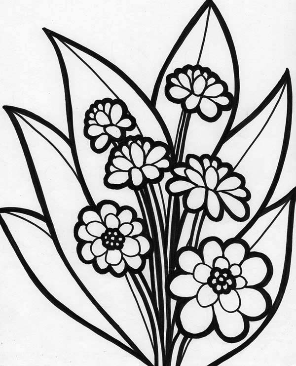Flowers, : Picture of Beautiful Blooming Flower Coloring Page