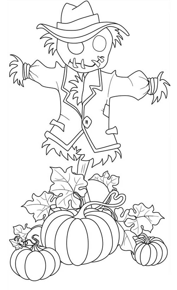 Pumpkins, : Pumpkins and Scarecrow Pumpkins Coloring Page