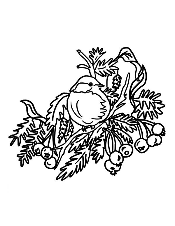 coloring pages robin tree - photo#19