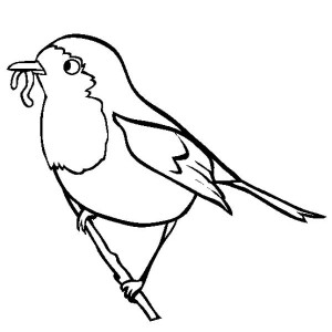 Robin bird coloring pages for kids ~ Robin Bird On Christmas Tree Coloring Page : Kids Play Color