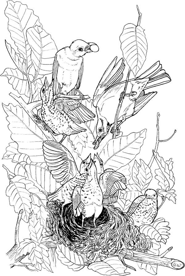 Robin, : Robin Nest Coloring Page