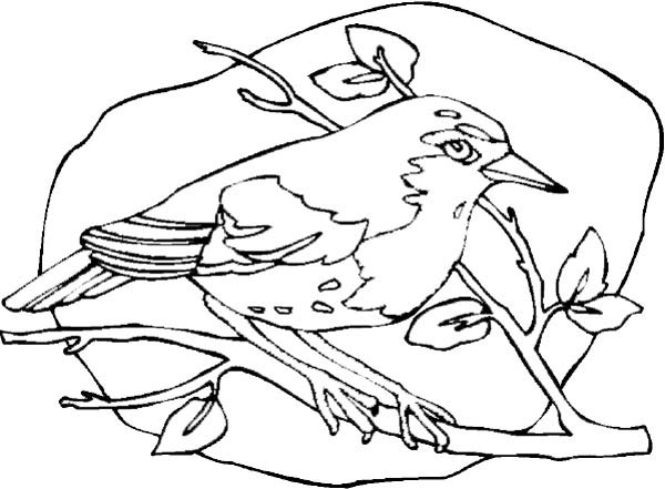 Robin, : Robin o Branch Tree Coloring Page