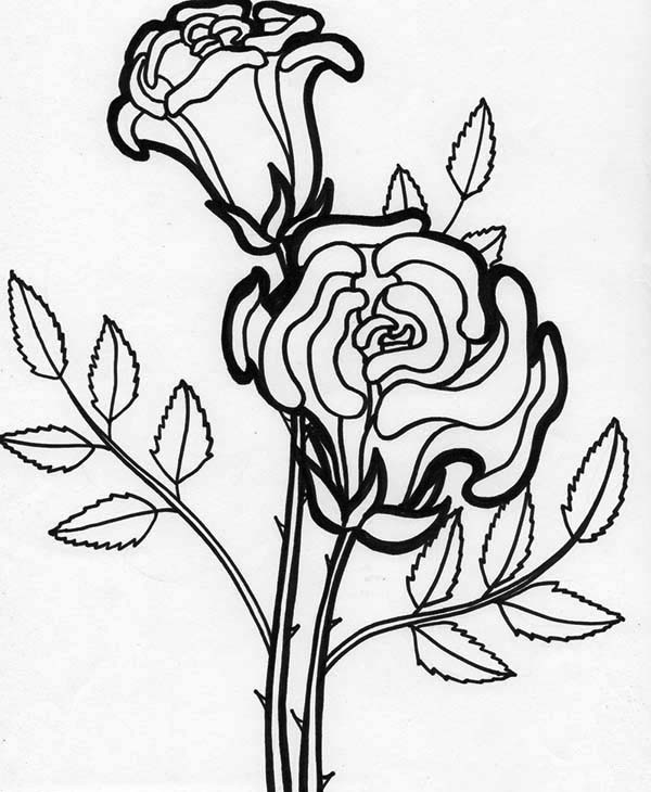 Rose Flower Blooming Coloring Page : Kids Play Color