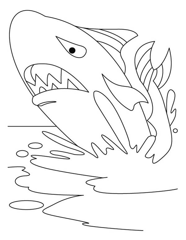 Whale, : Shark Coloring Page