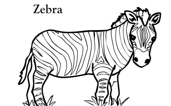 Zebra, : Short Zebra Coloring Page