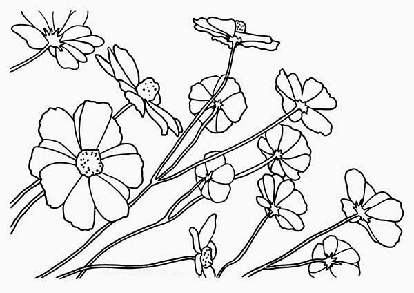Flowers, : Wild Flower Coloring Page