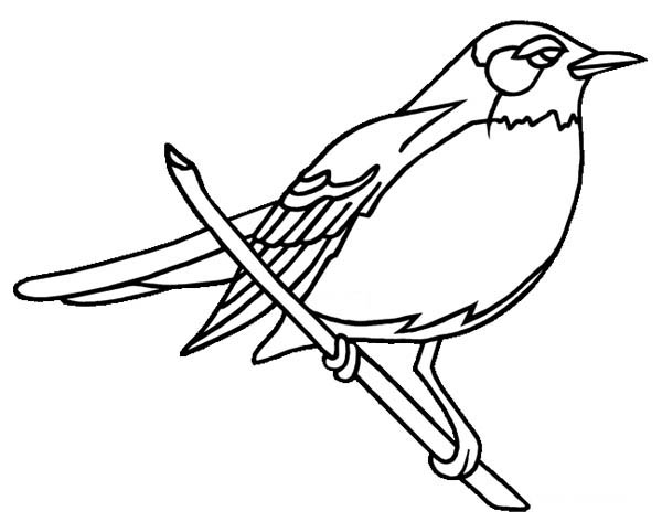Robin, : Wisconsin Robin Coloring Page
