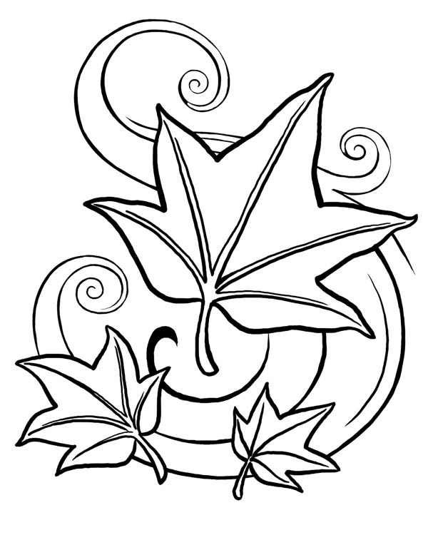 Maple Leaf, : Amazing Drawing of Maple Leaf Coloring Page