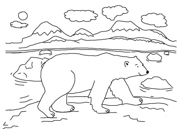 Arctic Animals, : Arctic Animals Polar Bear Walking Around Coloring Page