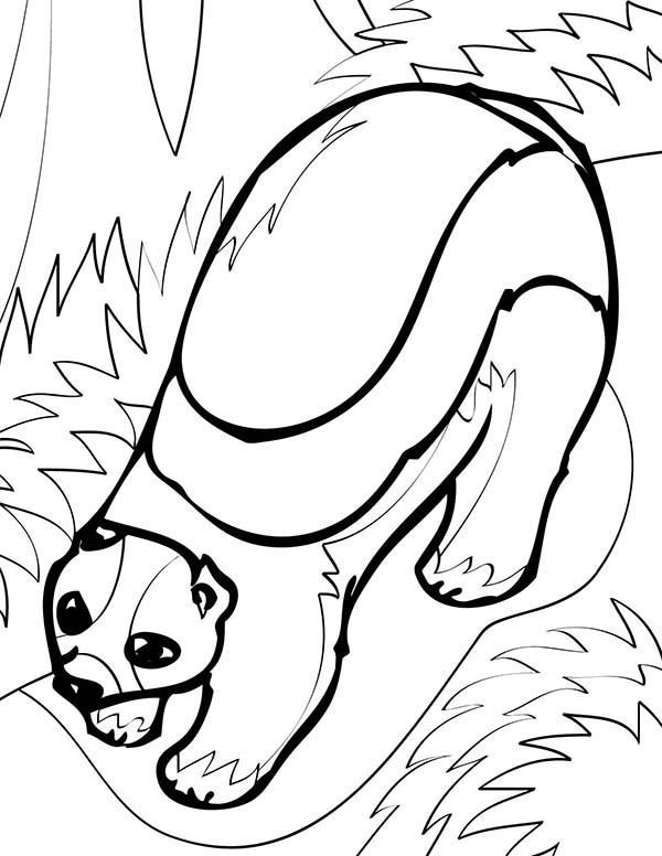 Arctic Animals, : Arctic Animals Wolverine Coloring Page