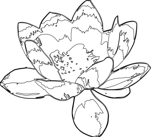 Lotus Flower, : Artistic Drawing of Lotus Flower Coloring Page