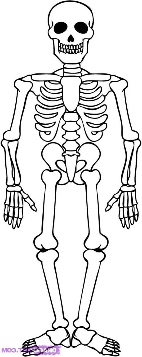 временем скелет шаблон картинка люка таковы