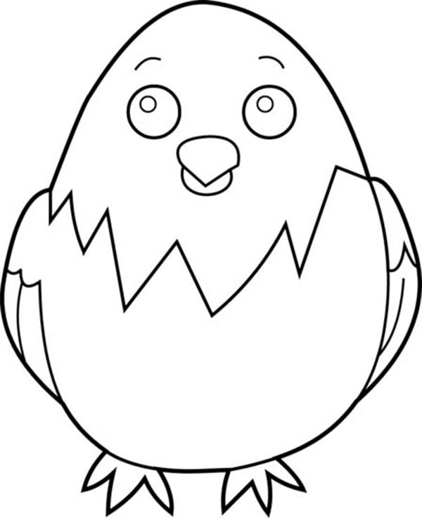 Baby Chick, : Baby Chick Posing Coloring Page