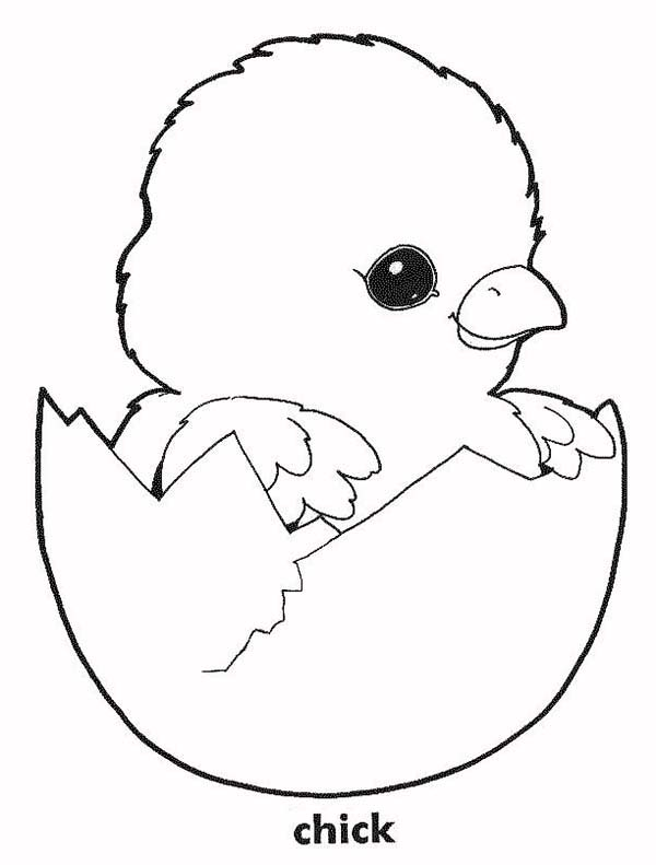 Baby Chick, : Baby Chick in His Eggshell Coloring Page