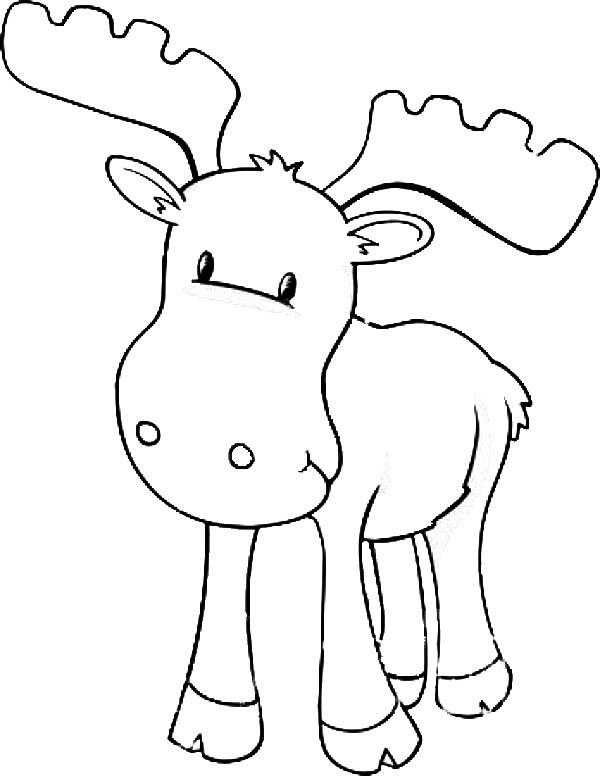 Moose, : Baby Moose Coloring Page