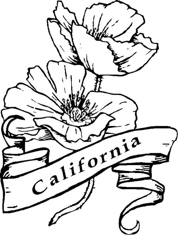 California Poppy, : California Poppy is Californian Symbol Coloring Page
