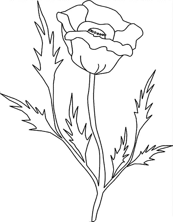California Poppy, : California Poppy with Pointy Leaves Coloring Page