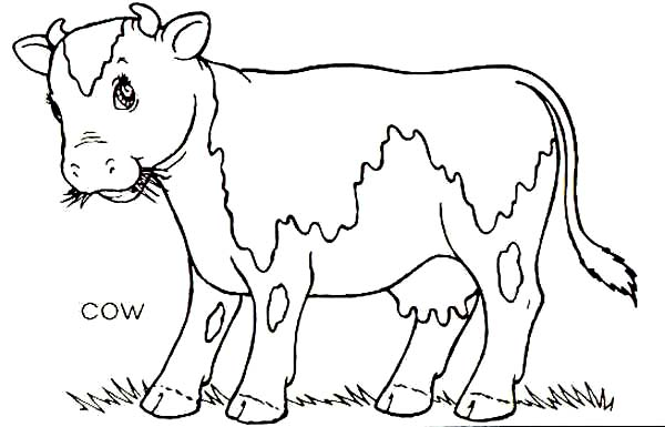 Cow, : Cow Eat a Lot of Grass Coloring Page