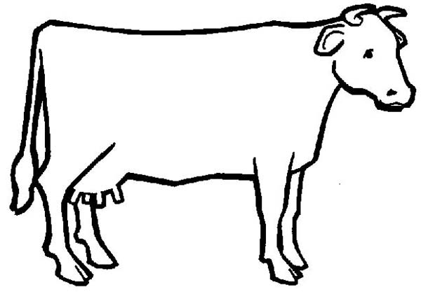 Cow, : Cow Outline Coloring Page