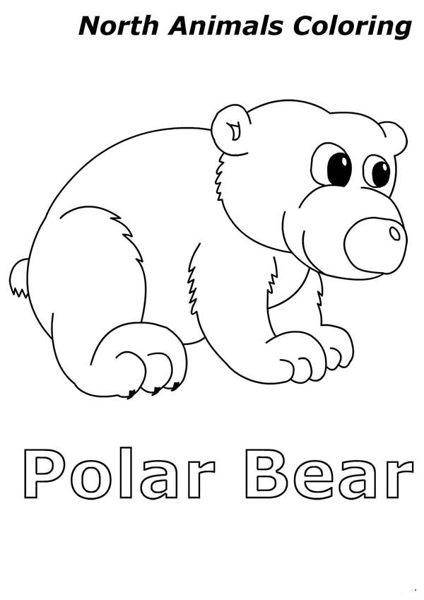 Arctic Animals, : Cute Baby Polar Bear in Arctic Animals Coloring Page