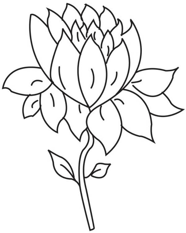 Lotus Flower, : Cute Picture of Lotus Flower Coloring Page