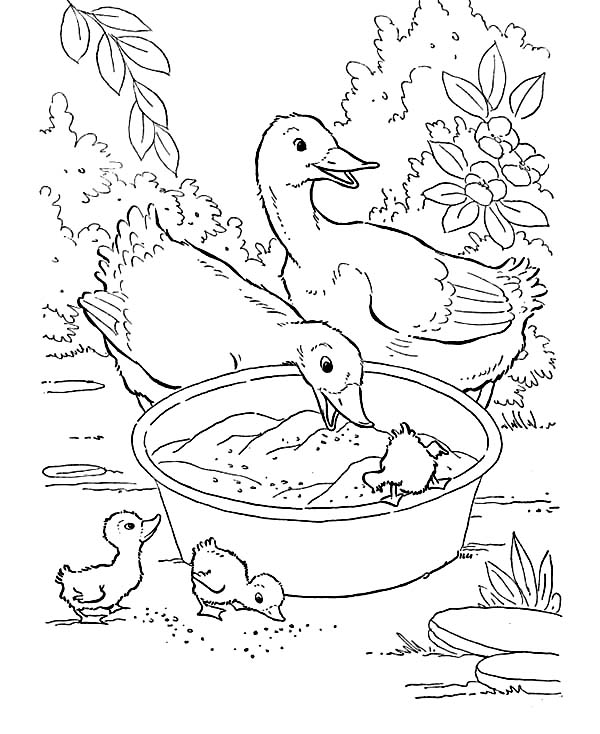 Farm Animal, : Duck Mother with Their Children Eating in the Washbolw in Farm Animal Coloring Page