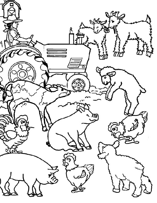 Farm Animal, : Farm Animal Activities Coloring Page
