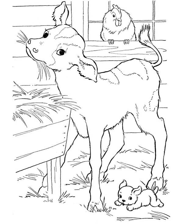 Farm Animal, : Goat Eating Straw in the Barn in Farm Animal Coloring Page