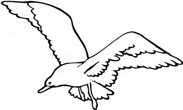 Seagull, : Great Black Backed Seagull Coloring Page