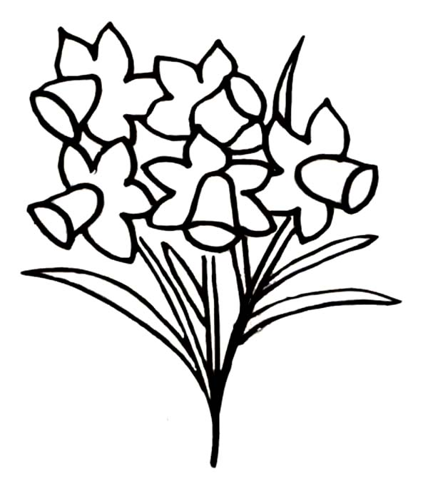 Daffodil, : Growing Daffodil Coloring Page