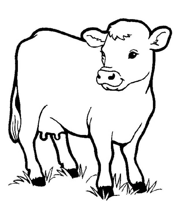 Farm Animal, : Healthy Milch Cow in Farm Animal Coloring Page