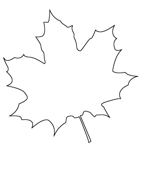 draw maple leaf coloring page kids play color