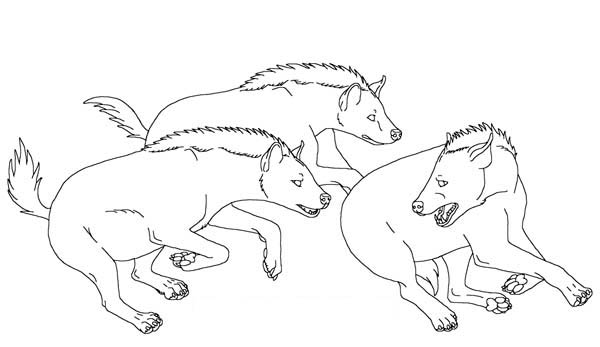 Hyena, : Hyena Chasing Each Other Coloring Page