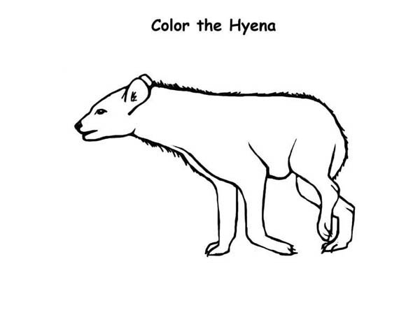 Hyena, : Hyena Hunting for Food Coloring Page