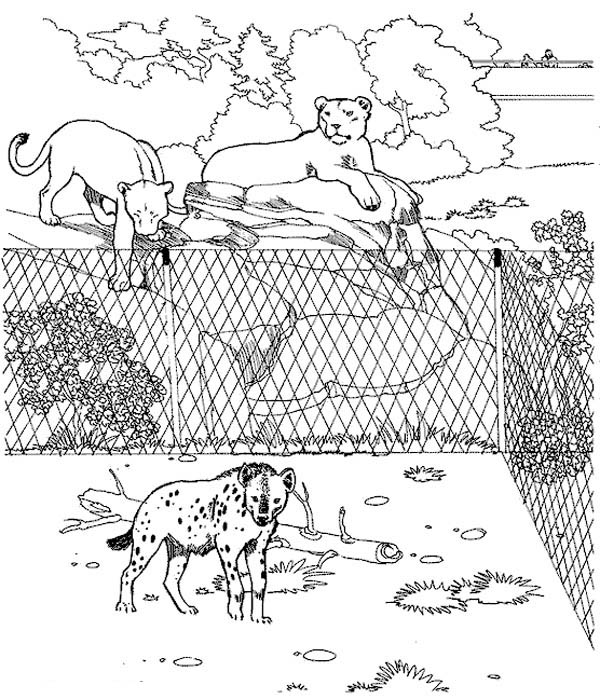 Hyena, : Hyena in the Zoo Coloring Page