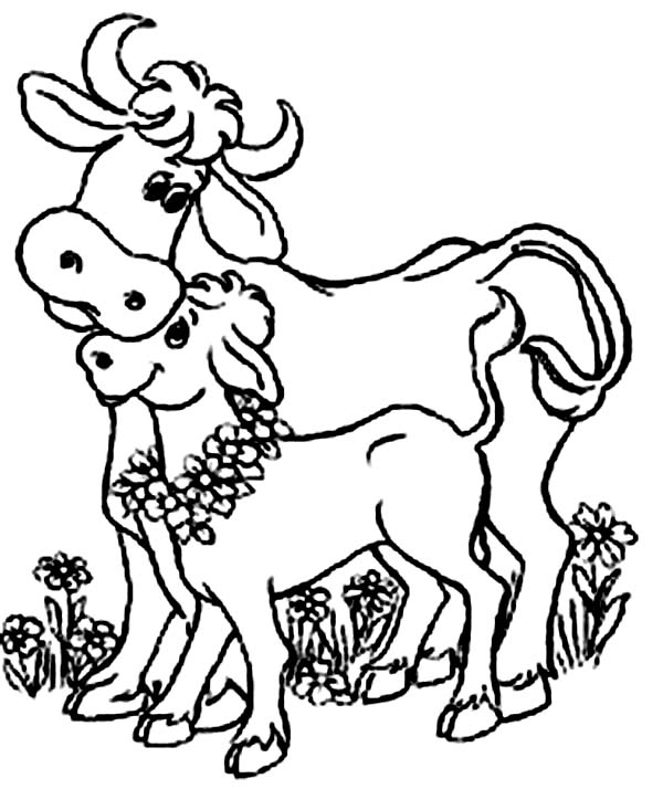 Cow, : Indian Cow and Her Baby Cow Coloring Page
