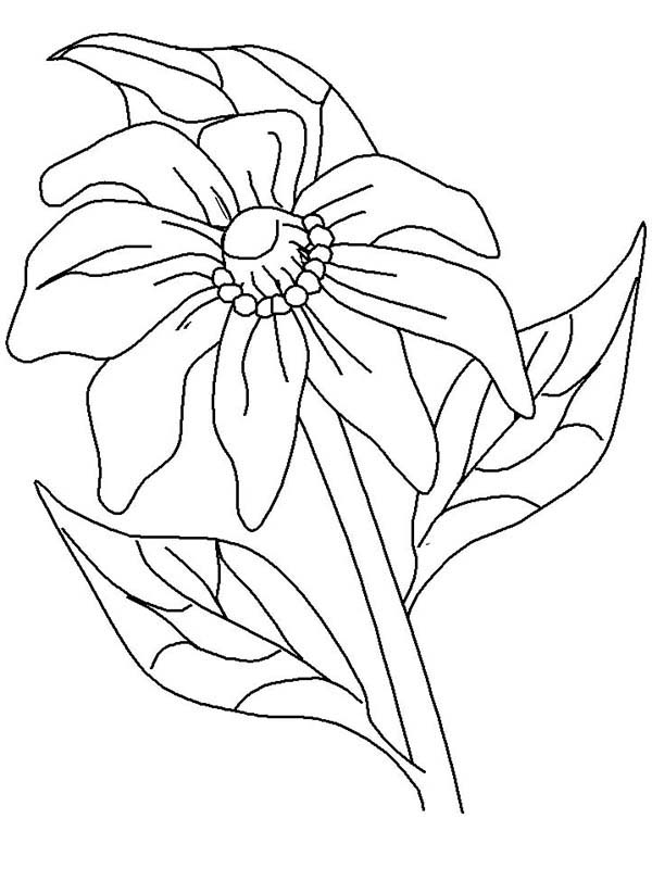 Kids Drawing Of California Poppy Coloring Page Kids Play