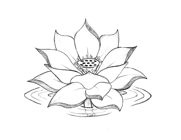 Lotus Flower, : Lotus Flower Blooming on the Water Coloring Page
