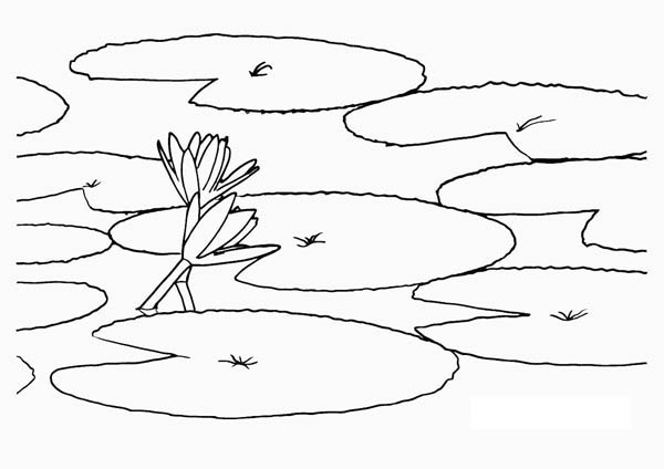 Lotus Flower, : Lotus Flower Closes and Goes Under Water Coloring Page