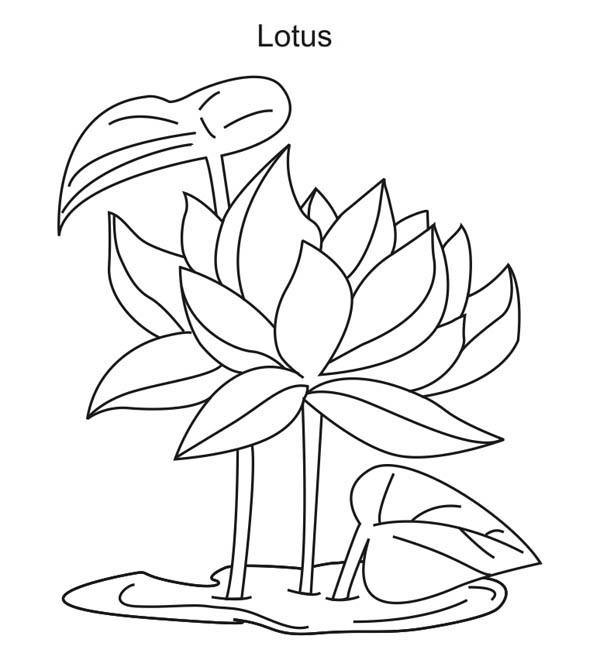 Lotus Flower Growing Coloring Page Kids Play Color