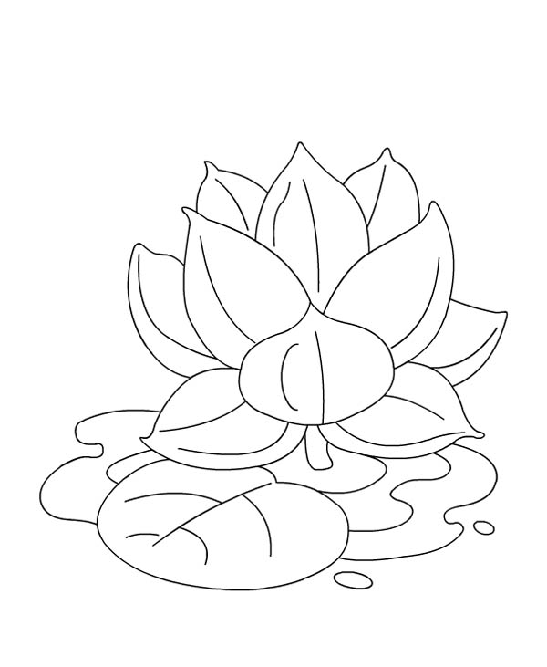 Lotus Flower, : Lotus Flower on the Water Coloring Page