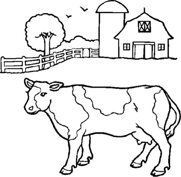 Farm Animal, : Milch Cow on Farm Animal Coloring Page