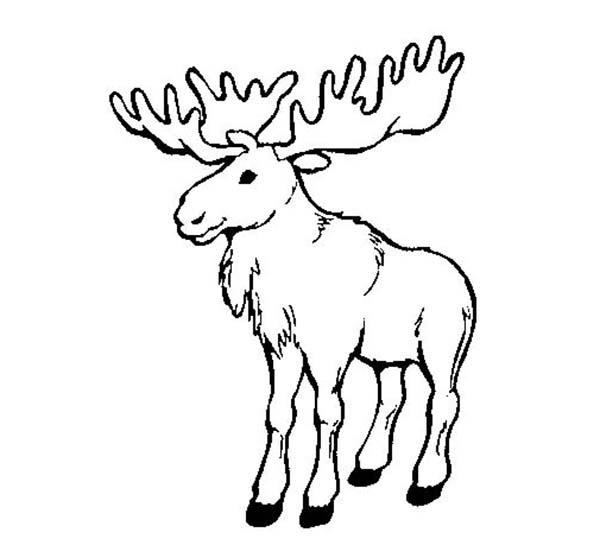 Moose, : Moose Image Coloring Page