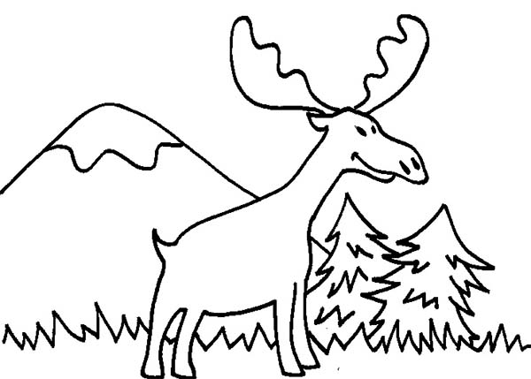 Moose, : Moose Looking for Food Coloring Page