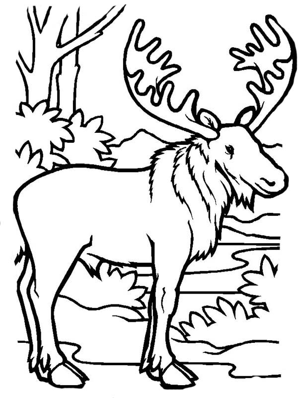 Moose, : Moose in the Jungle Coloring Page